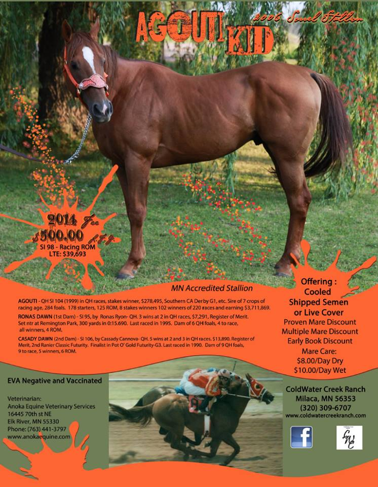 Agouti Kid Stallion Flyer
