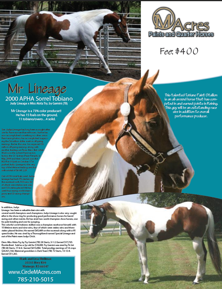 Circle M Acres Stallion Ad