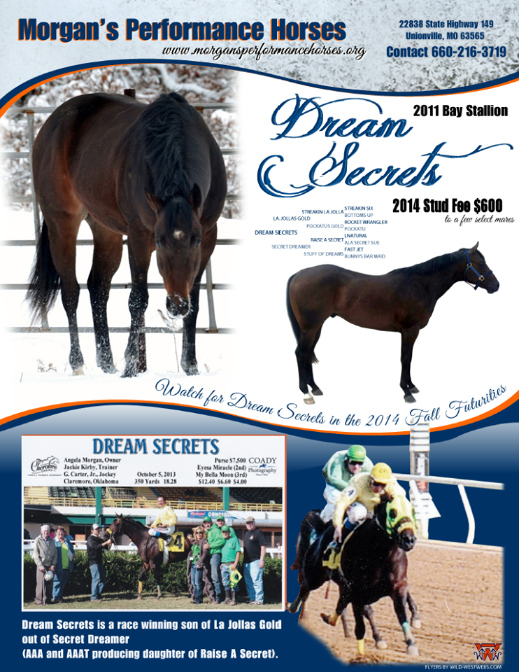 deram secrets stallion ad